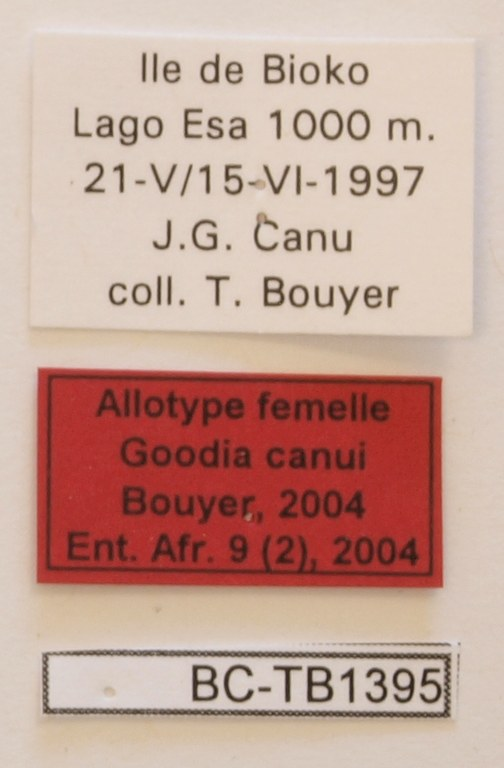 Goodia canui F Labels Allotype.JPG