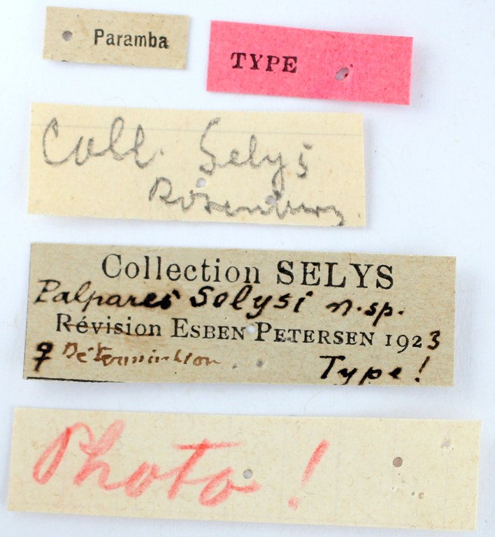 BE-RBINS-ENT Palpares selysi Holotype Female Labels Jerome Constant.JPG
