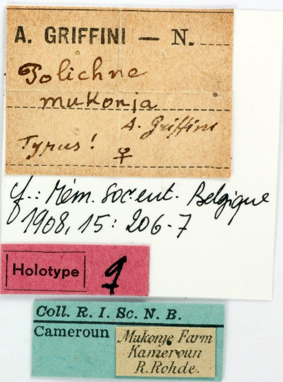 BE-RBINS-ENT Polichne mukonja Holotype Female Labels Jerome Constant.JPG