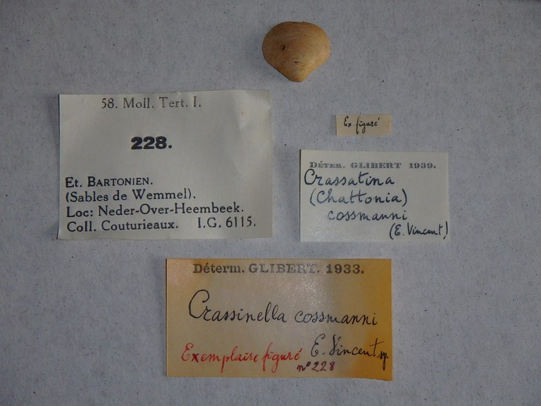 Specimen + labels