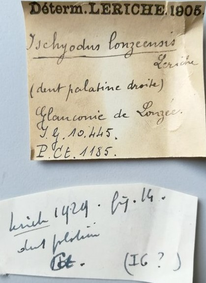 IRSNB P 1185 labels