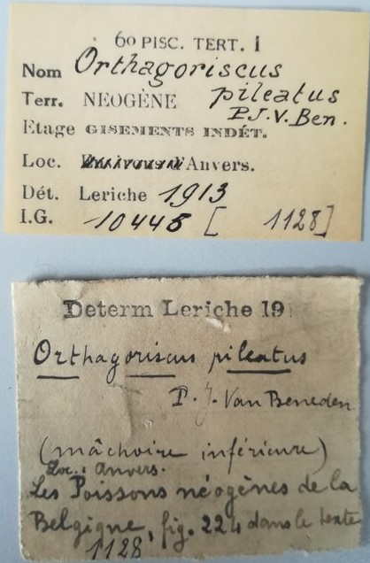 IRSNB P 1128 labels