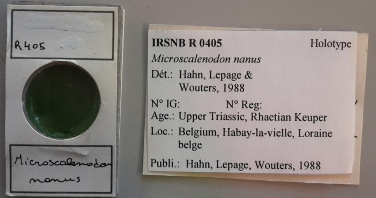 IRSNB R 0405