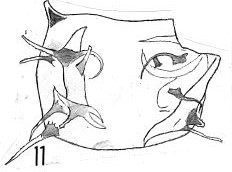 Fig. 11 - Acanthodiacrodium scytotomillei n. sp. Holotype. La Roquemaillère : ROQ-6. b 449.