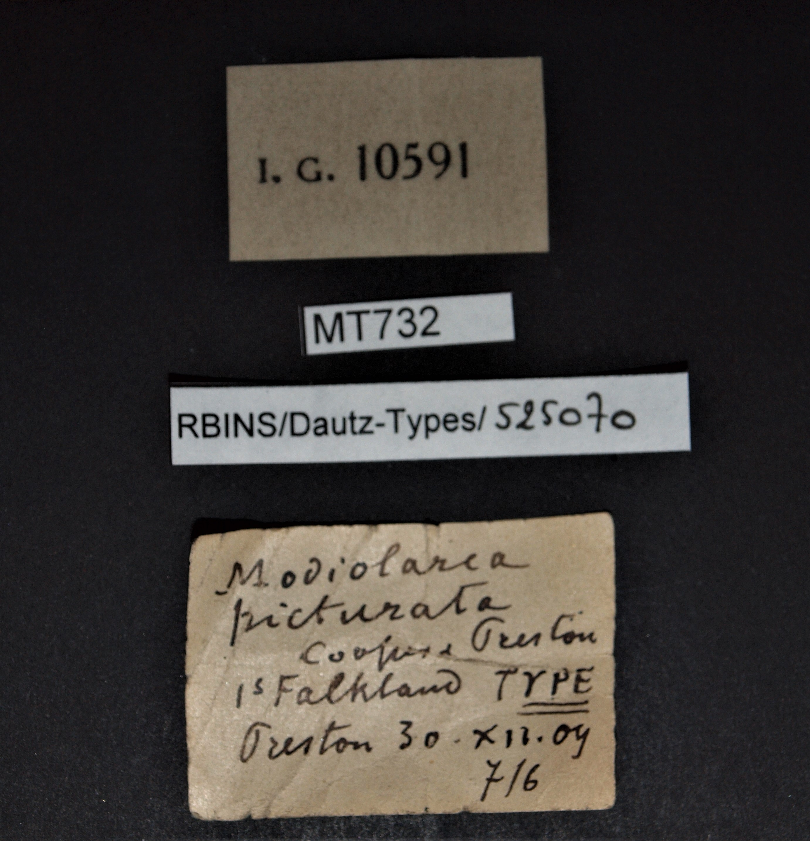 BE-RBINS-INV PARATYPE MT 732 Modiolarca picturata LABELS.jpg