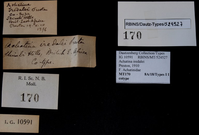 BE-RBINS-INV COTYPE MT 170 Achatina iredalei LABELS.jpg