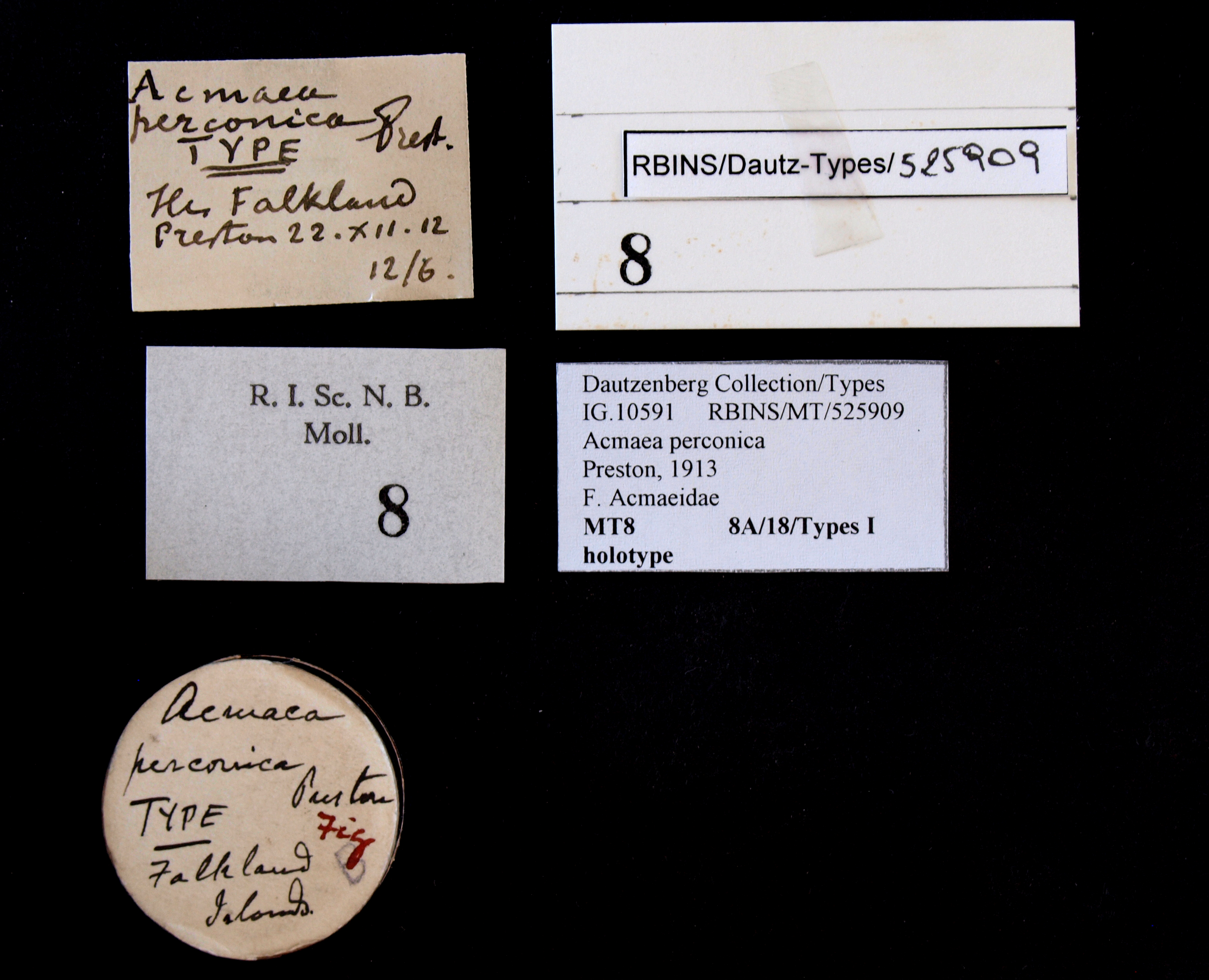 BE-RBINS-INV MT 8 Acmaea perconica HOLOTYPE LABELS.jpg