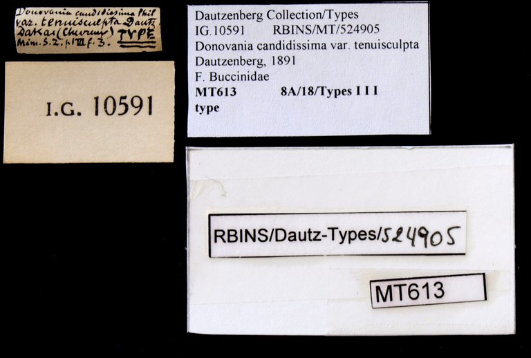 BE-RBINS-INV TYPE MT 613 Donovania candissima var. tenuisculpta LABELS.jpg