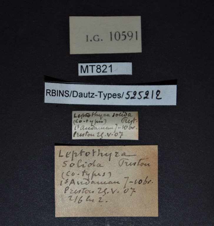 BE-RBINS-INV PARATYPE MT 821 Leptopoma solida LABELS.jpg