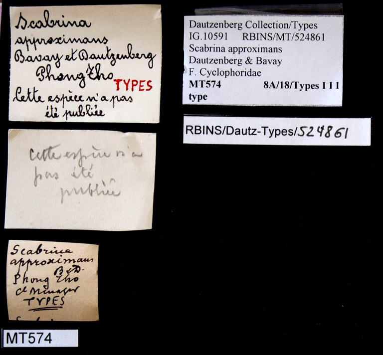 BE-RBINS-INV TYPE MT 574 Scabrina approximans LABELS.jpg