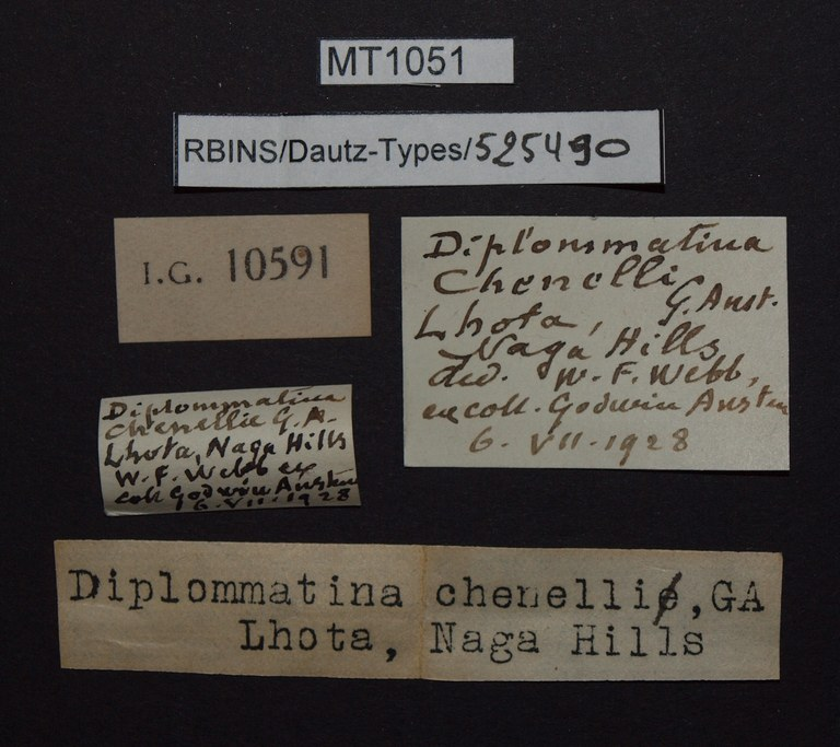 BE-RBINS-INV PARATYPE MT 1051 Diplommatina (Diplommatina) chennelli LABELS.jpg