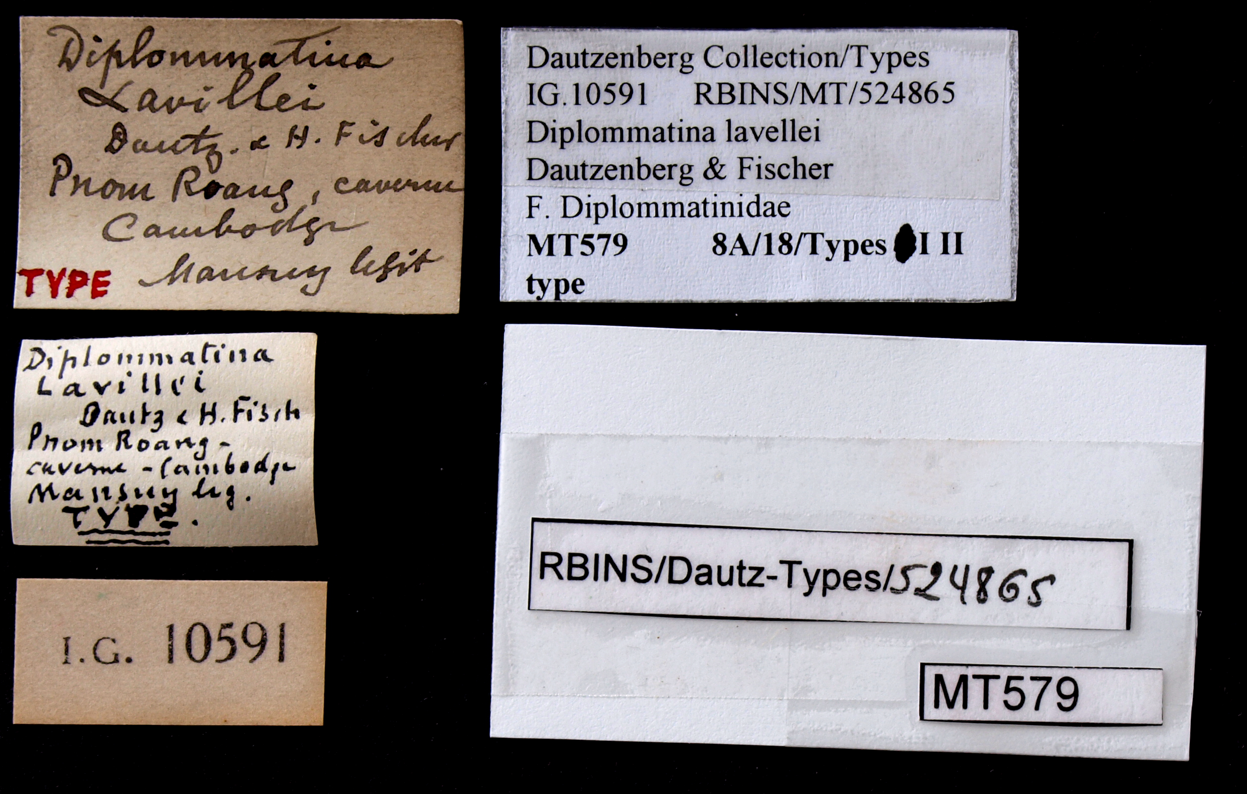 BE-RBINS-INV TYPE MT 579 Diplommatina lavillei LABELS.jpg