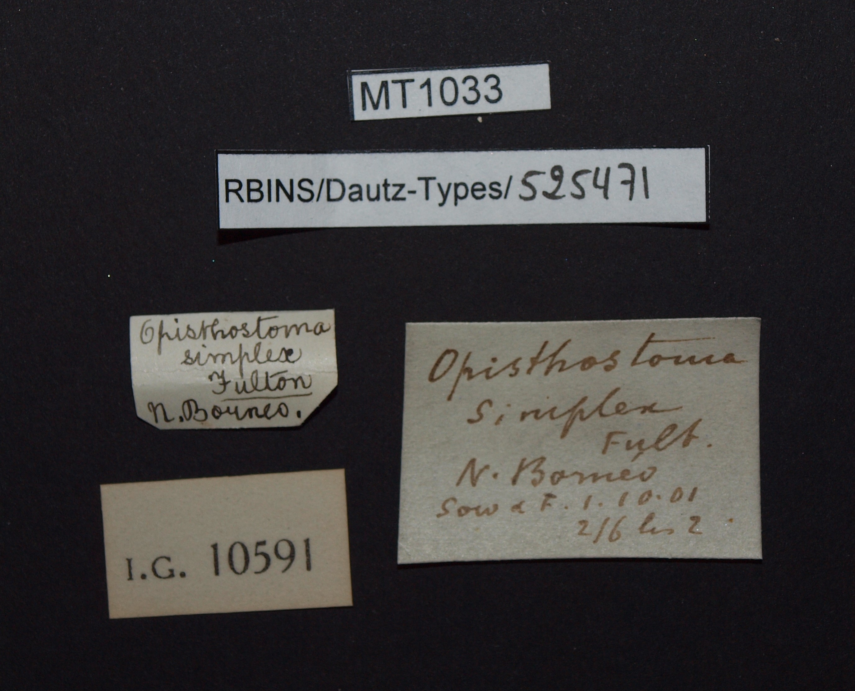 BE-RBINS-INV PARATYPE MT 1033 Opisthostoma (Plectostoma) simplex LABELS.jpg