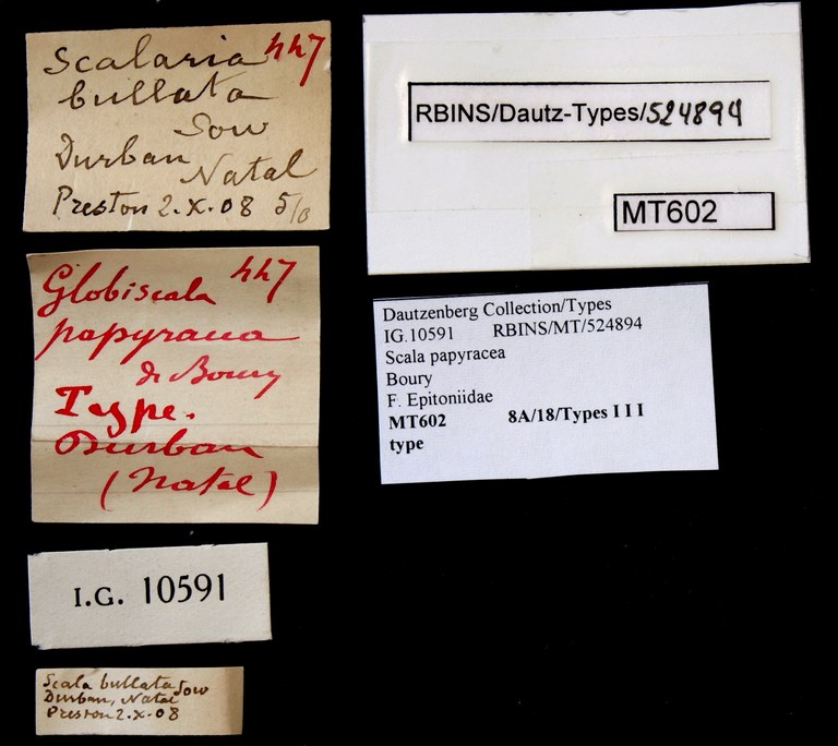 BE-RBINS-INV TYPE MT 602 Scala papyracea LABELS.jpg