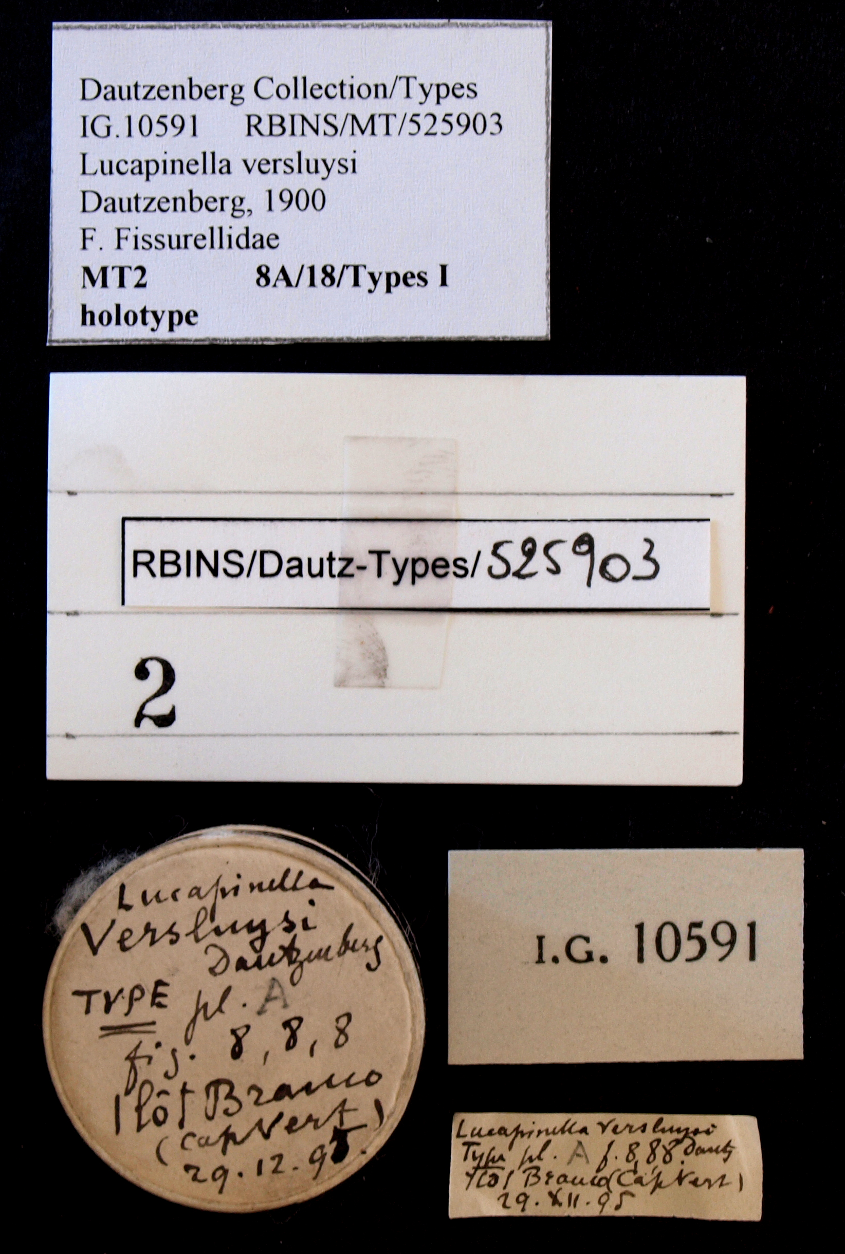 BE-RBINS-INV HOLOTYPE MT 2 Lucapinella versluysi LABELS.jpg