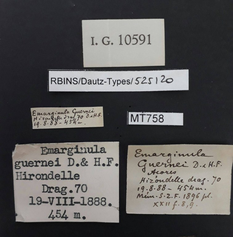 BE-RBINS-INV PARATYPE MT 758 Emarginula guernei LABELS.jpg