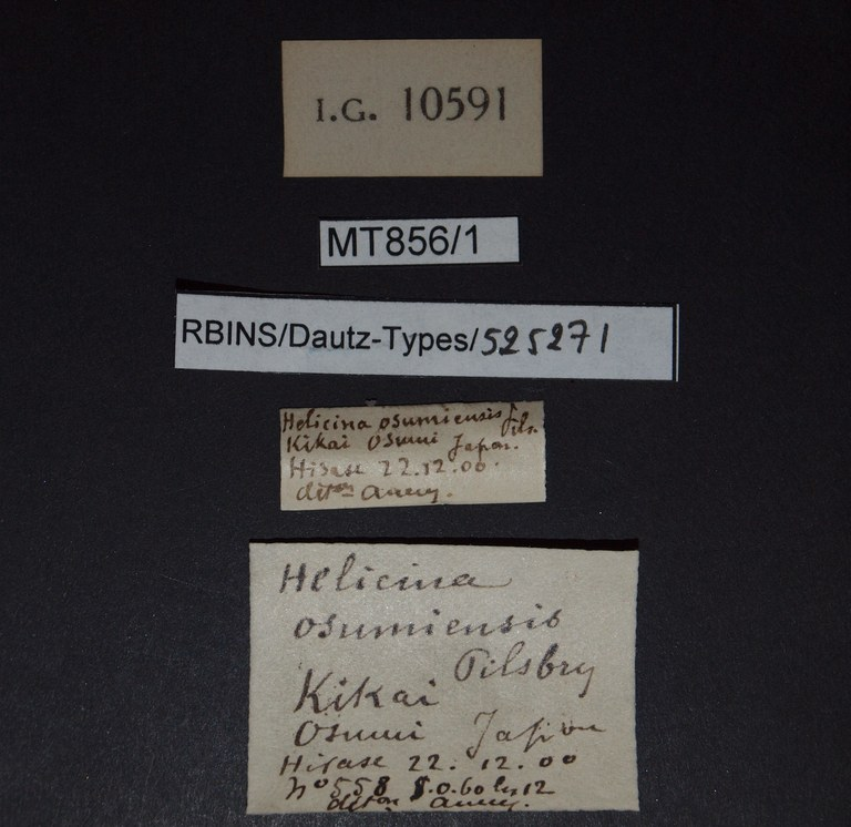 BE-RBINS-INV PARATYPE MT.856/1 Helicina osumiensis LABELS.jpg