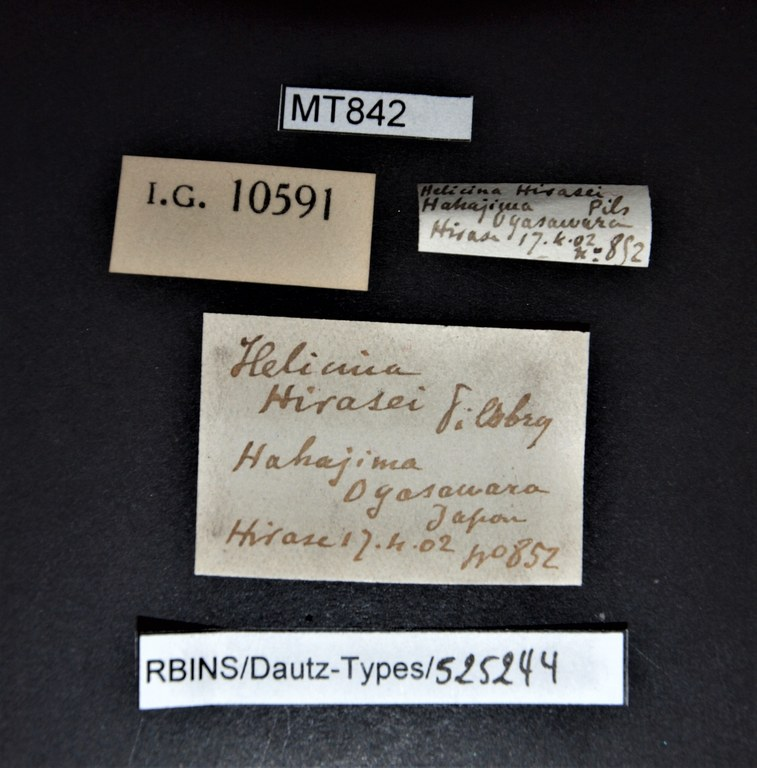 BE-RBINS-INV PARATYPE MT 842 Helicina hirasei LABELS.jpg