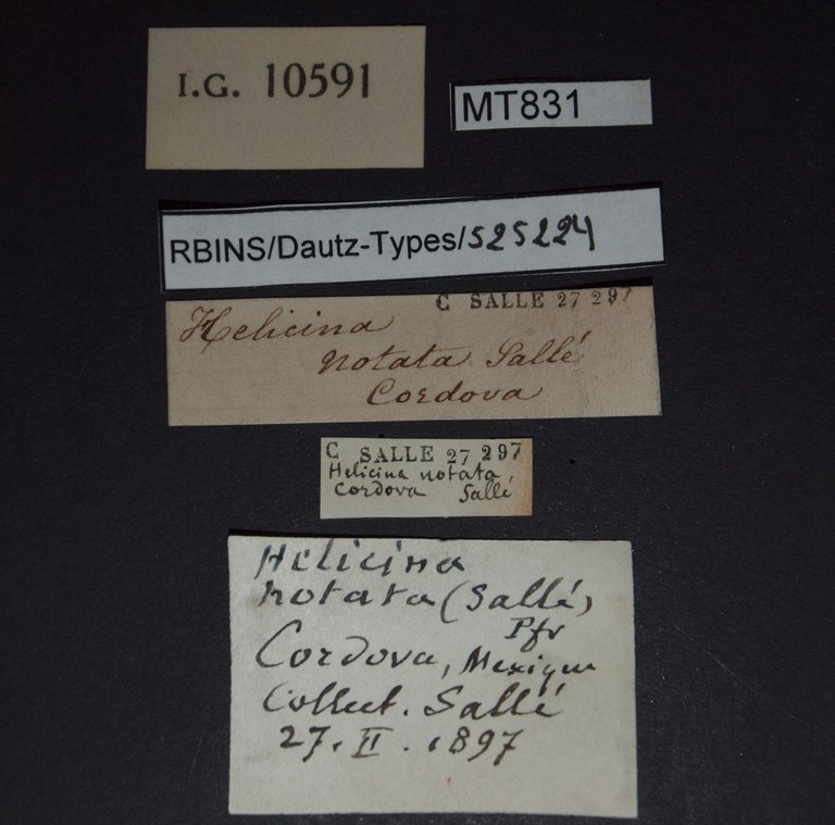 BE-RBINS-INV PARATYPE MT 831 Helicina (Tristramia) notata LABELS.jpg