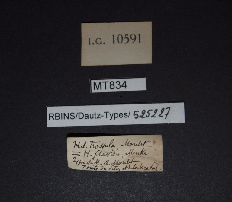 BE-RBINS-INV HOLOTYPE MT 834 Helicina (Tristramia) trossula LABELS.jpg