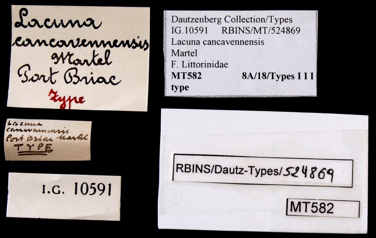 BE-RBINS-INV TYPE MT 582 Lacuna cancavennensis LABELS.jpg