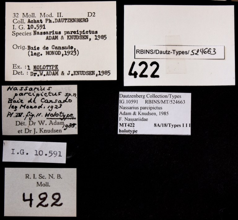 BE-RBINS-INV HOLOTYPE MT 422 Nassarius parcipictus LABELS.jpg