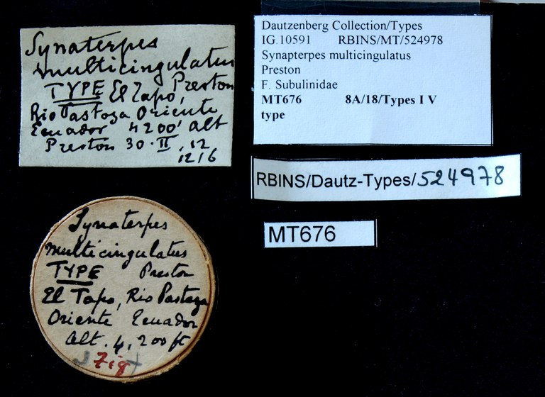 BE-RBINS-INV TYPE MT 676 Synapterpes multicingulatus LABELS.jpg