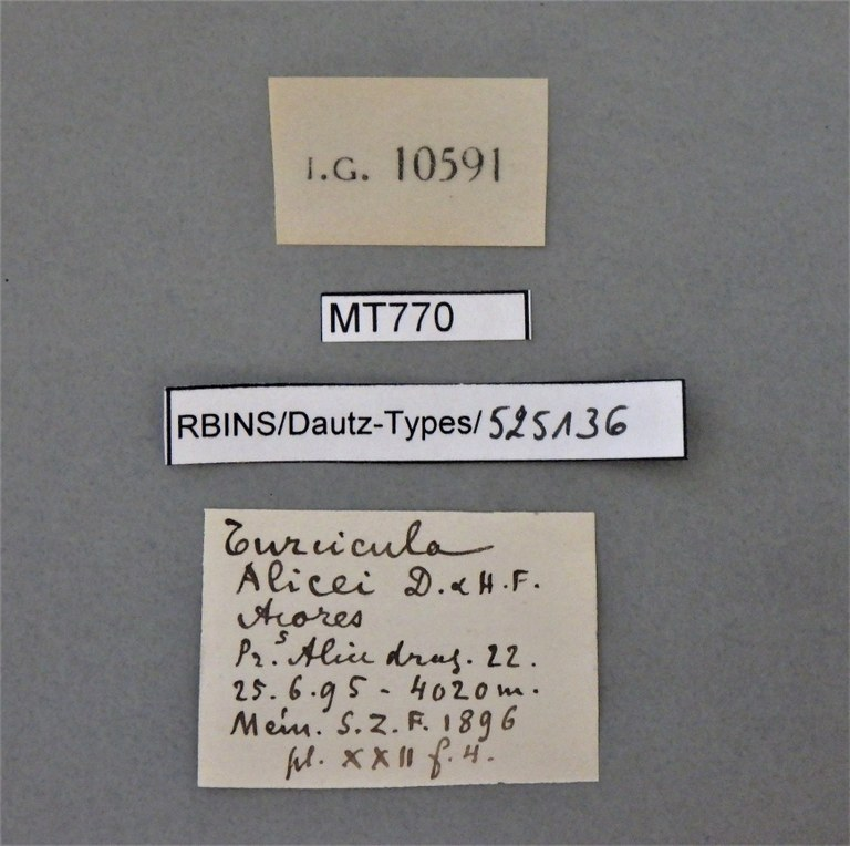 BE-RBINS-INV PARATYPE MT 770 Turcicula alicei LABELS.jpg