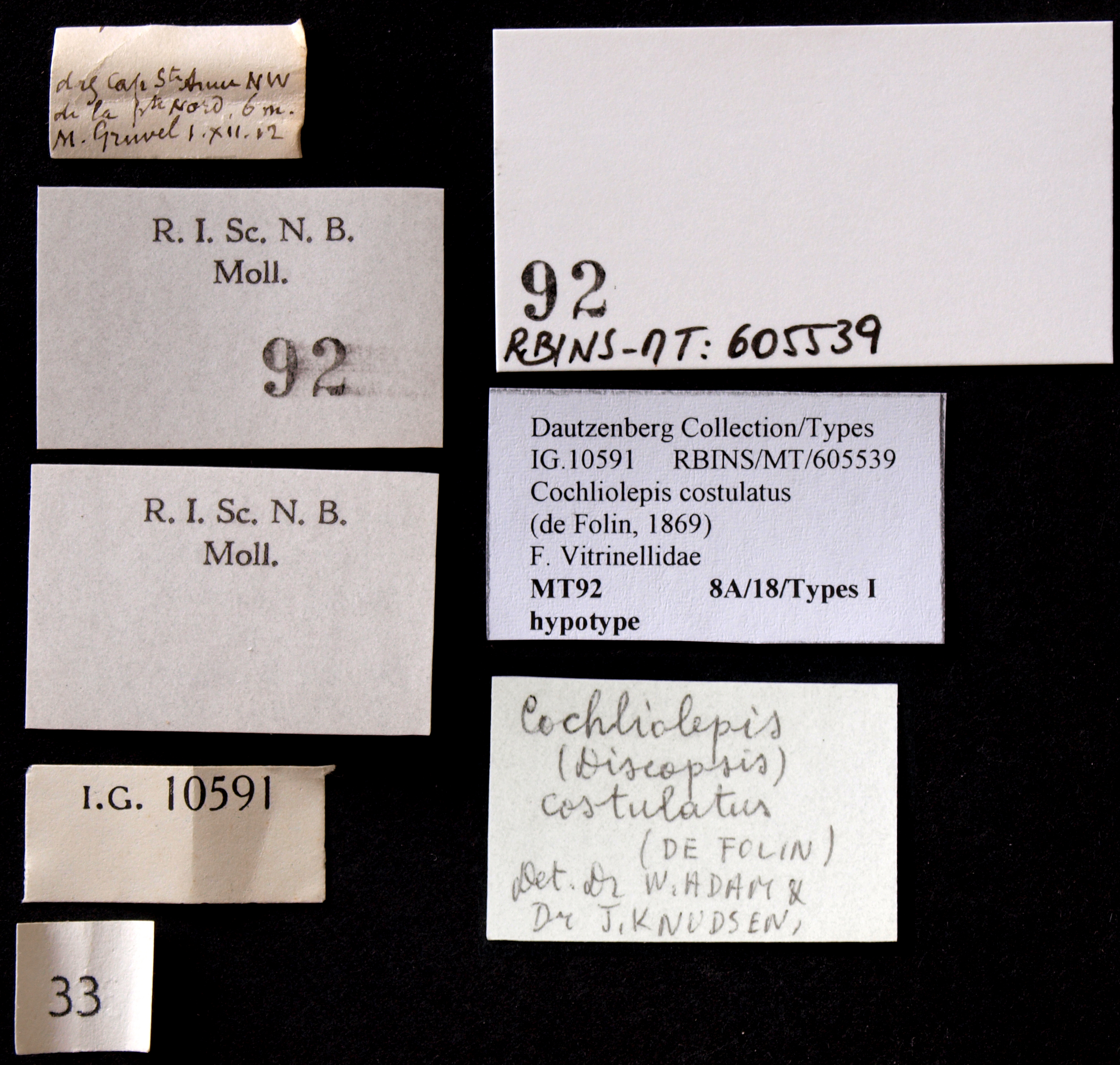 BE-RBINS-INV HYPOTYPE MT 92 Cochliolepis (Discopis) costulatus LABELS.jpg