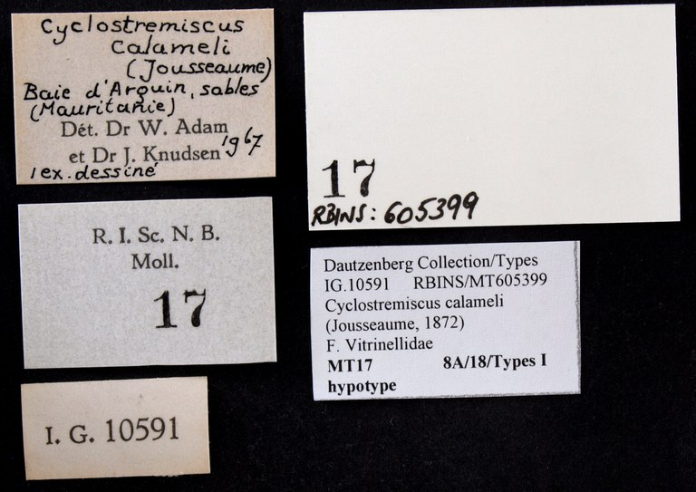 BE-RBINS-INV HYPOTYPE MT 17 Cyclostremiscus calameli LABELS.jpg