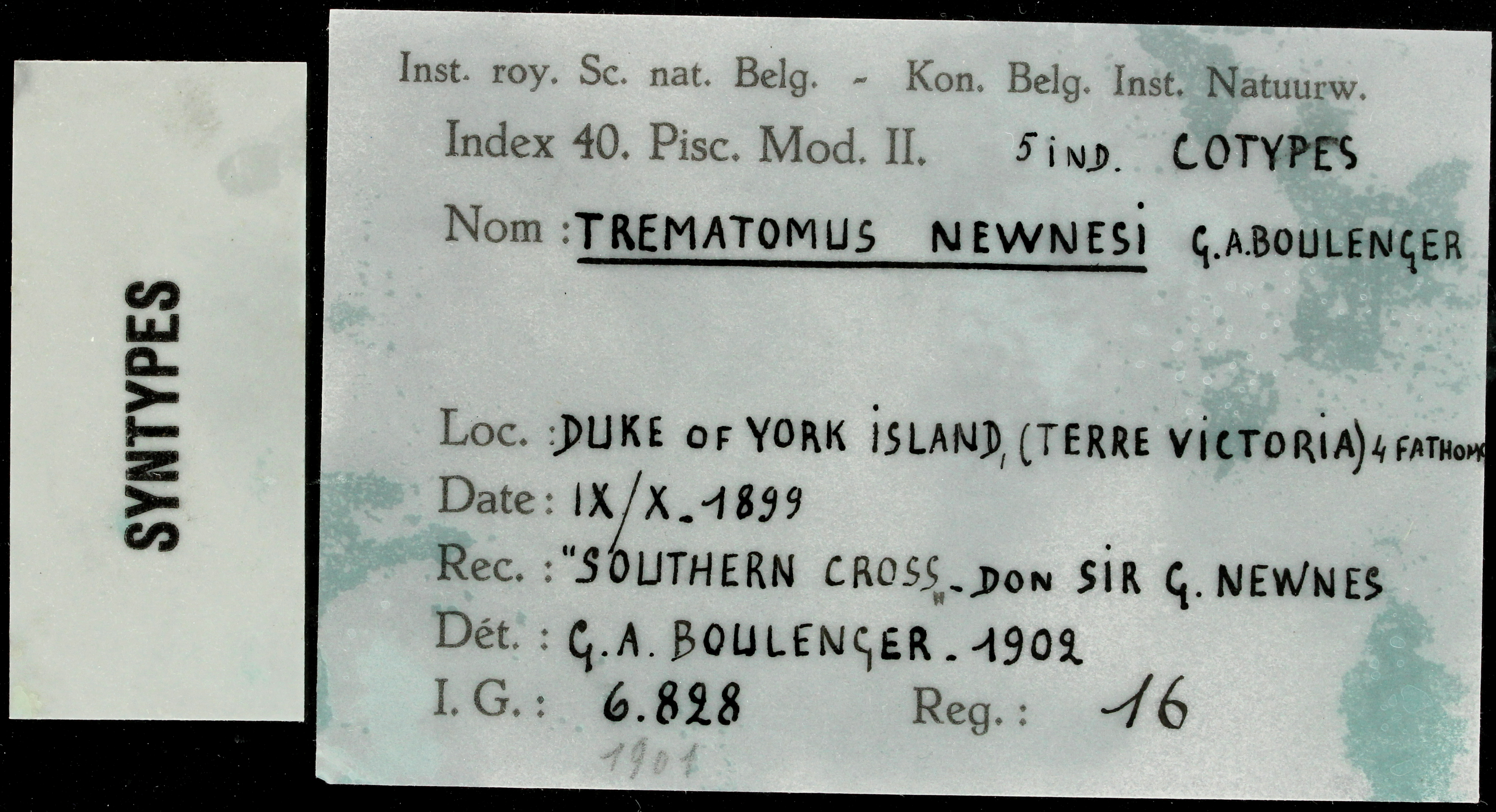 16 Trematomus newnesi 6828 ticket.JPG