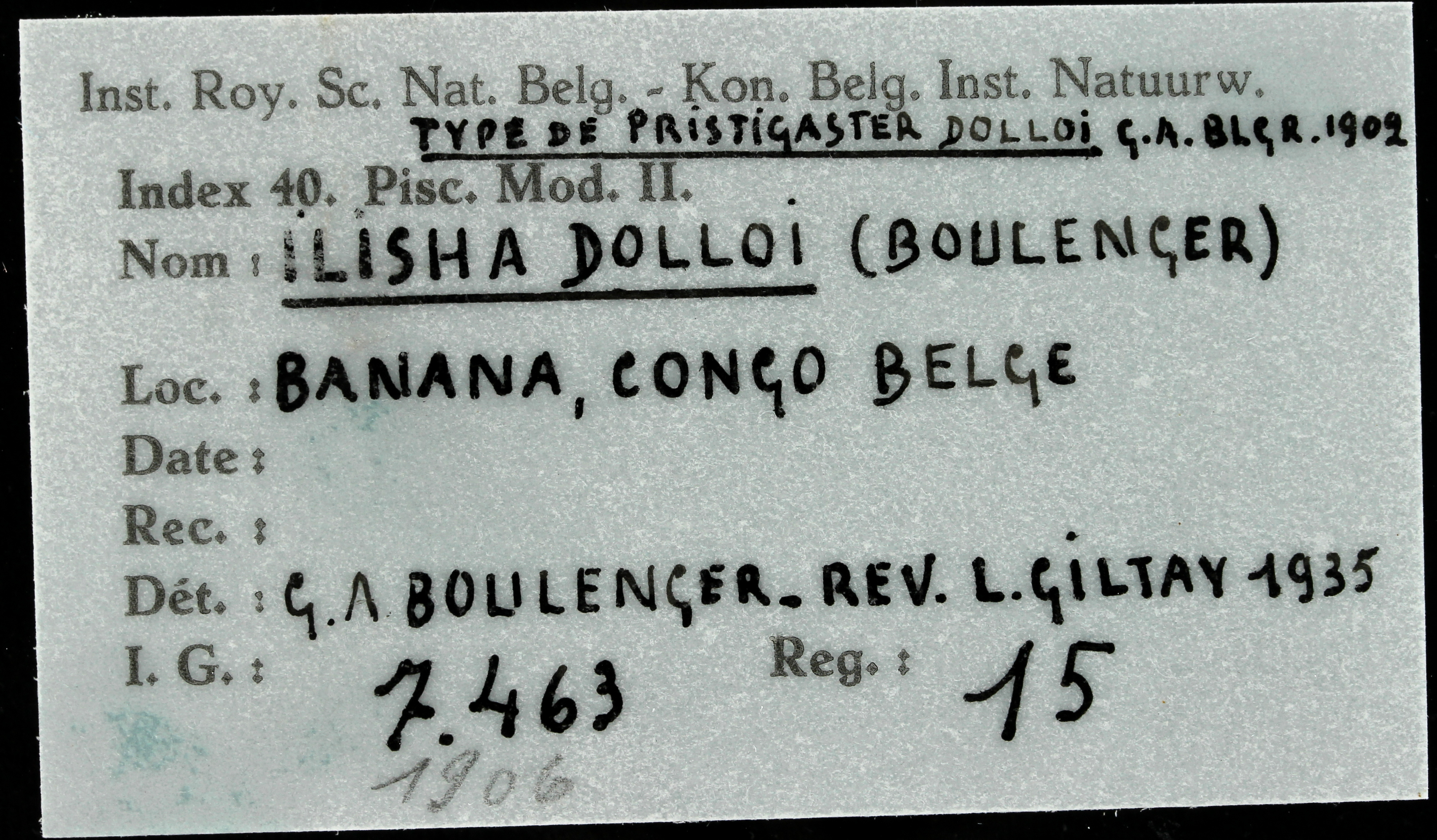 15 Pristigaster dolloi 7463 ticket.JPG