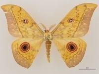 entomology.jpg