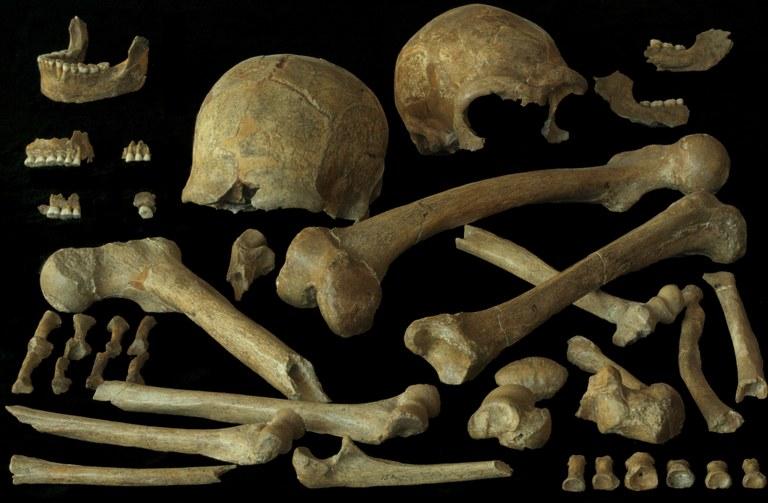 spy ossements.jpg