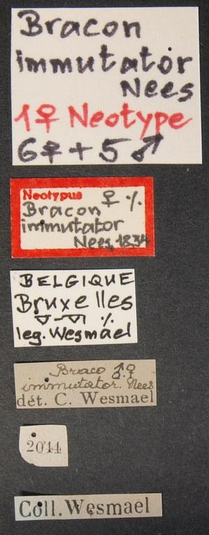 Braco immutator neo Lb.JPG