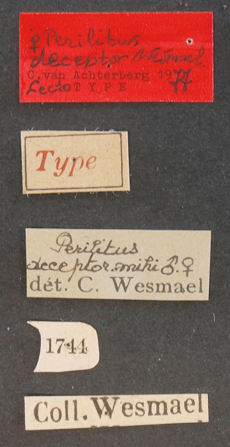 Perilitus deceptor lct Lb.JPG