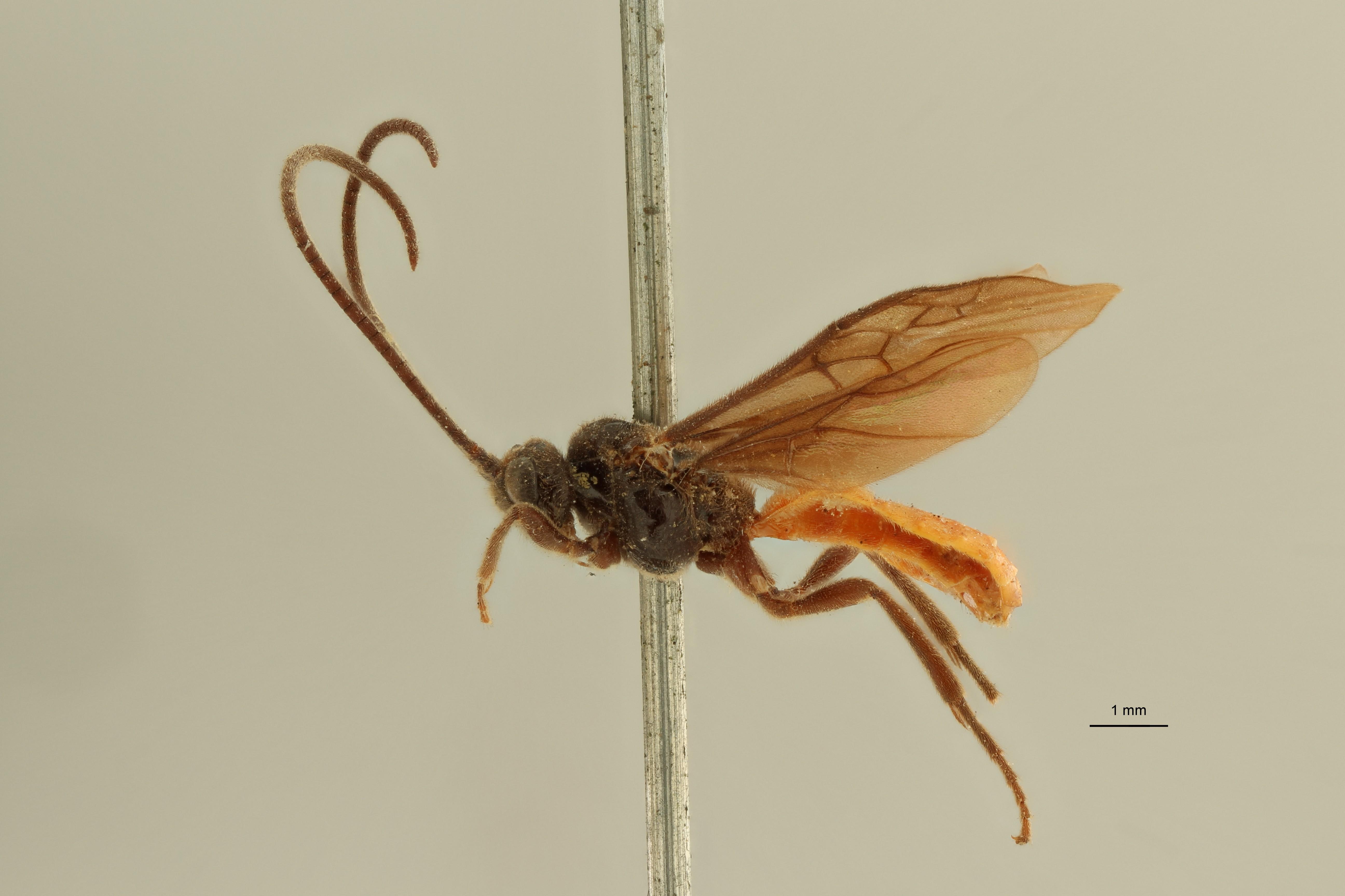 Proterops nigripennis et3 L ZS PMax Scaled.jpeg