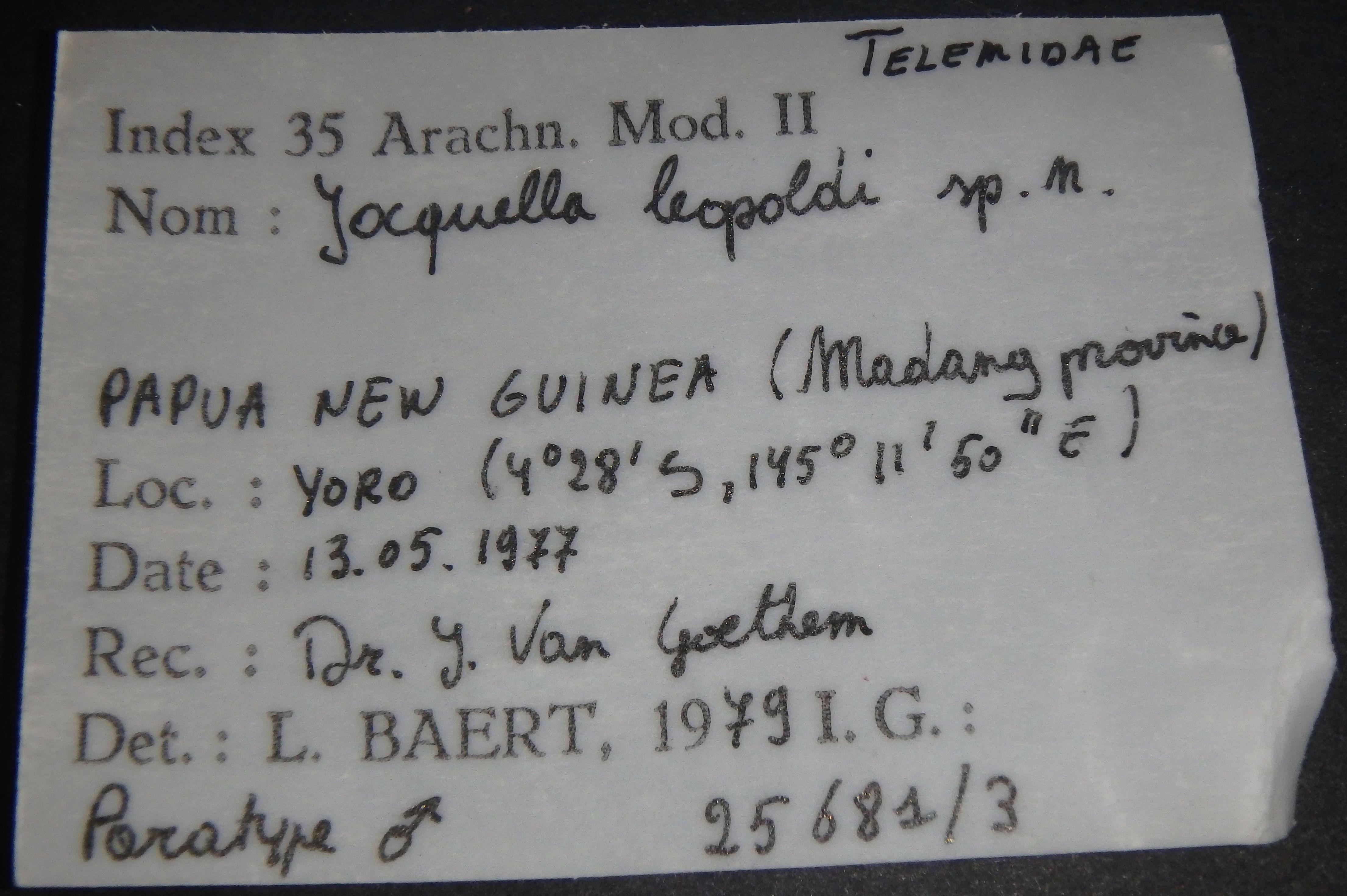 Jocquella leopoldi pt M Lb.JPG