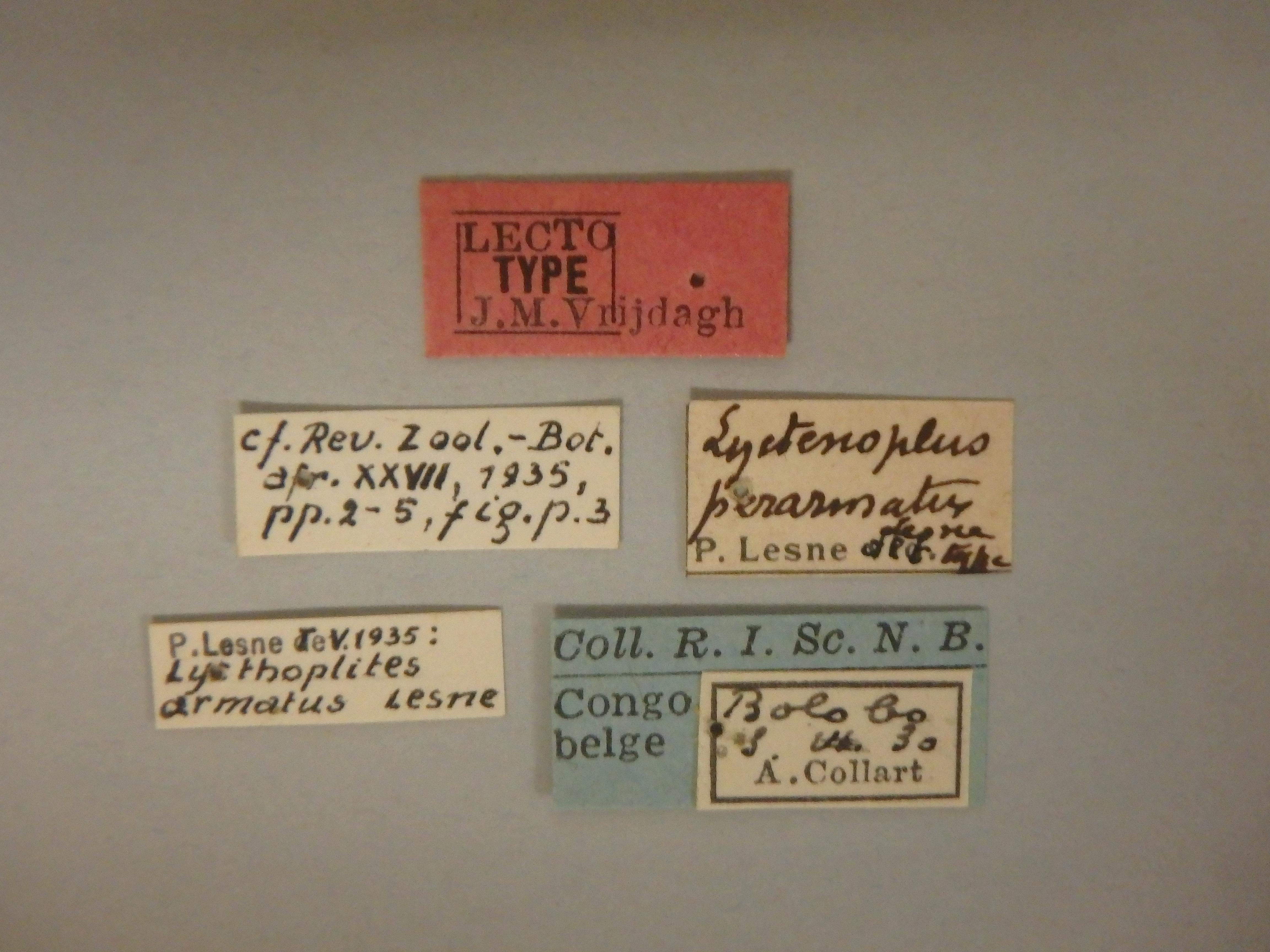Lycthoplites armatus lt Lb