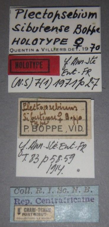 Plectopsebium sibutense ht Lb.JPG