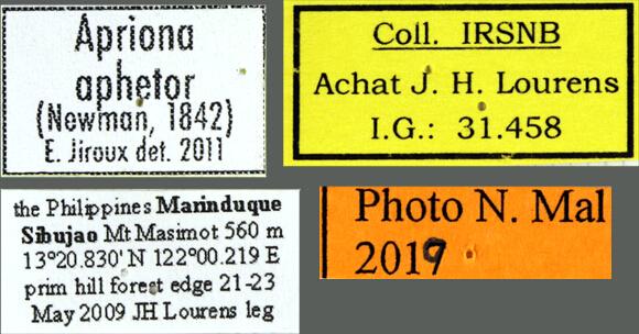 Apriona aphetor aphetor label.jpg