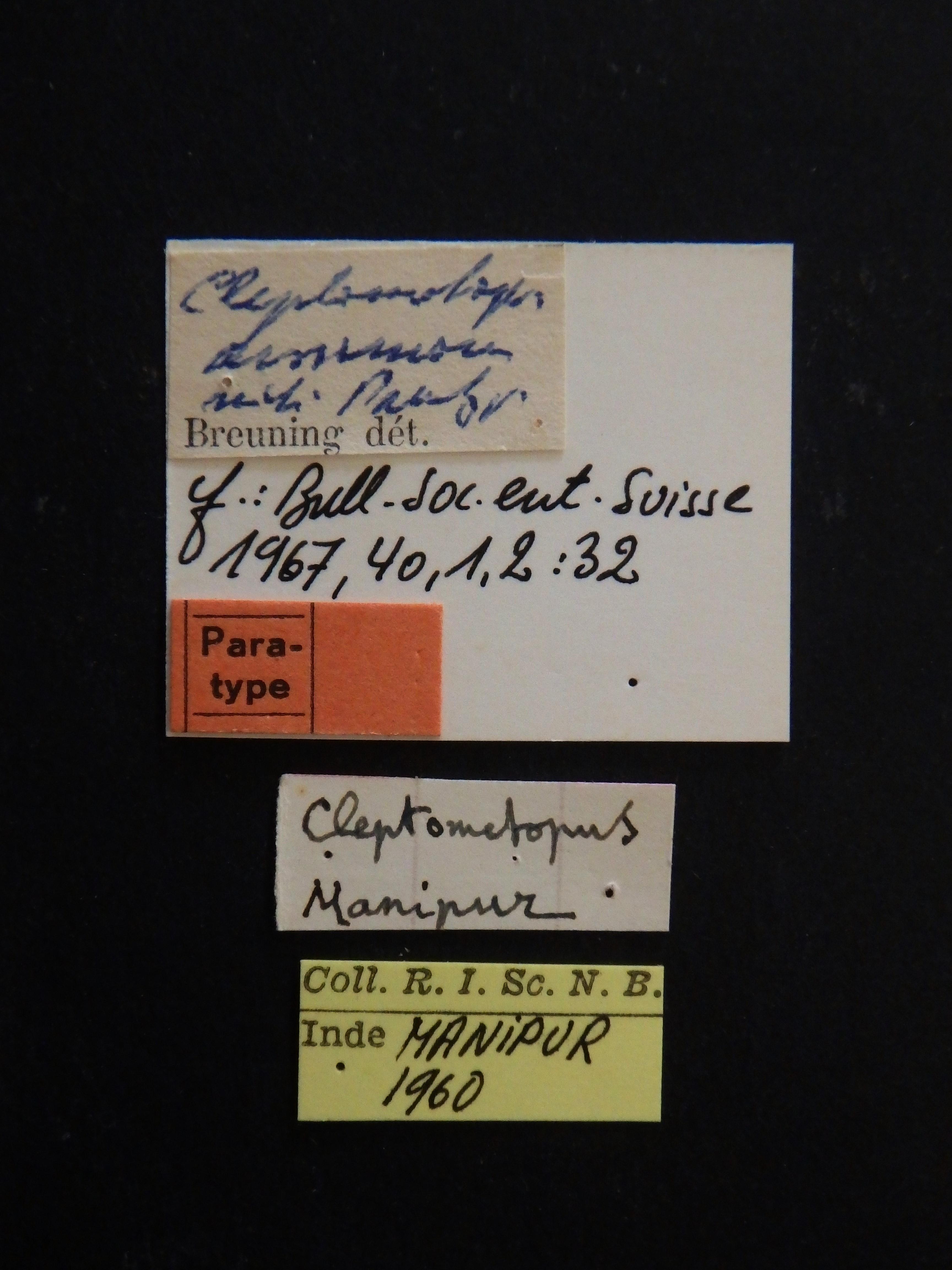 Cleptometopus assamanus pt Labels.JPG