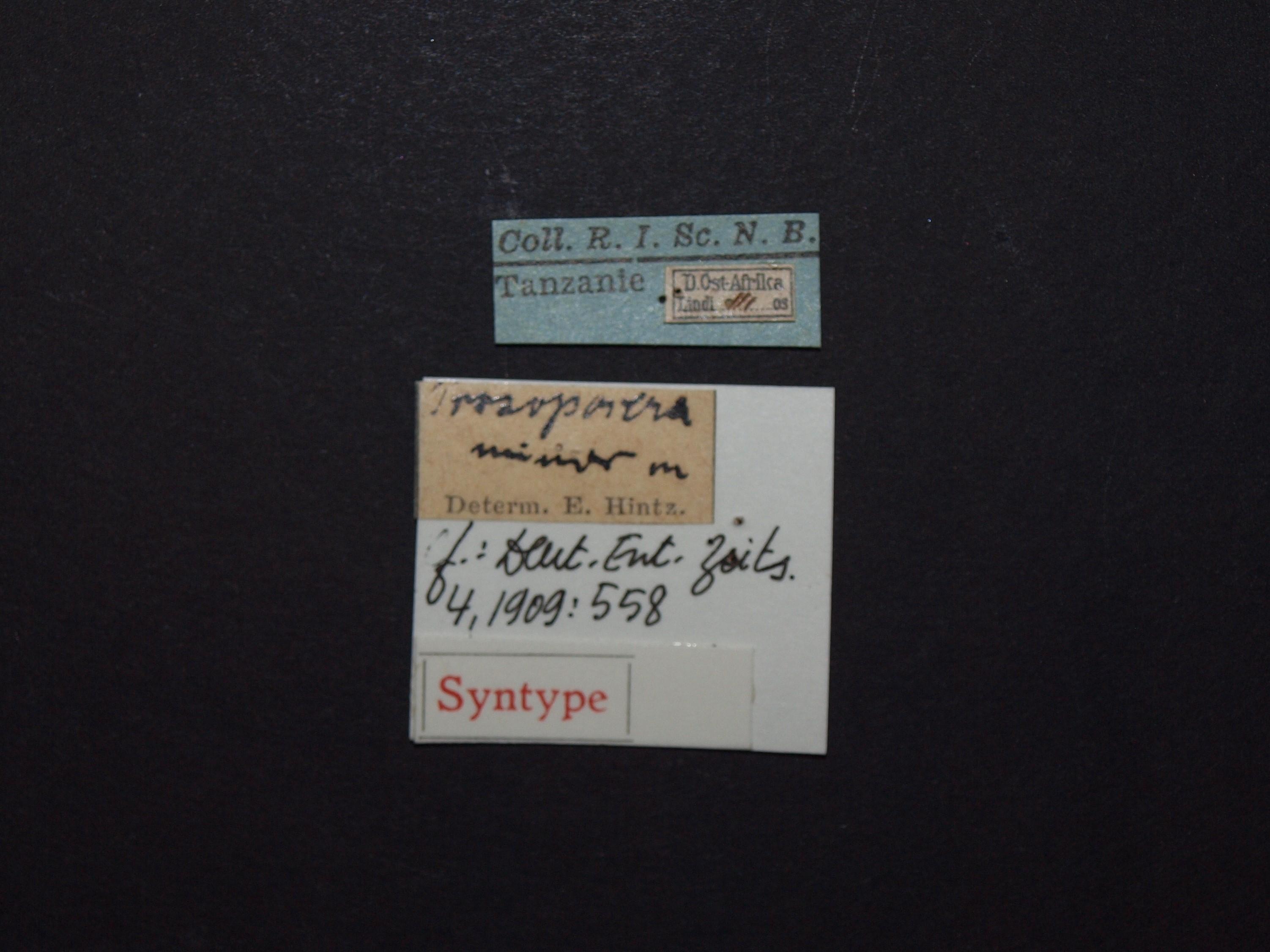 Prosopocera (Dalterus) inermis st Labels.JPG