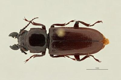 Recent invertebrates