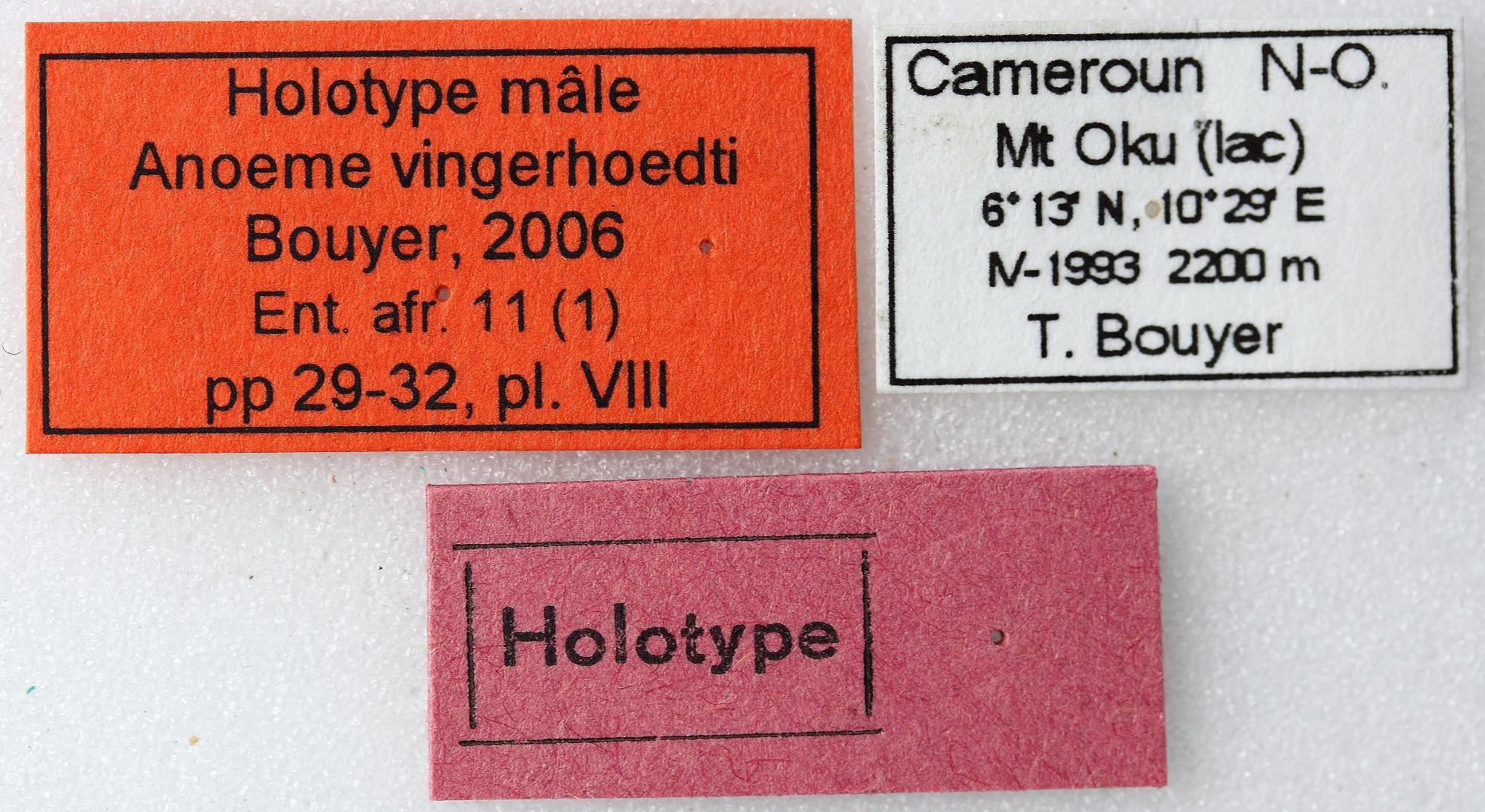 Anoeme vingerhoedti 01 00 Holotype M 024 BRUS 201405.jpg