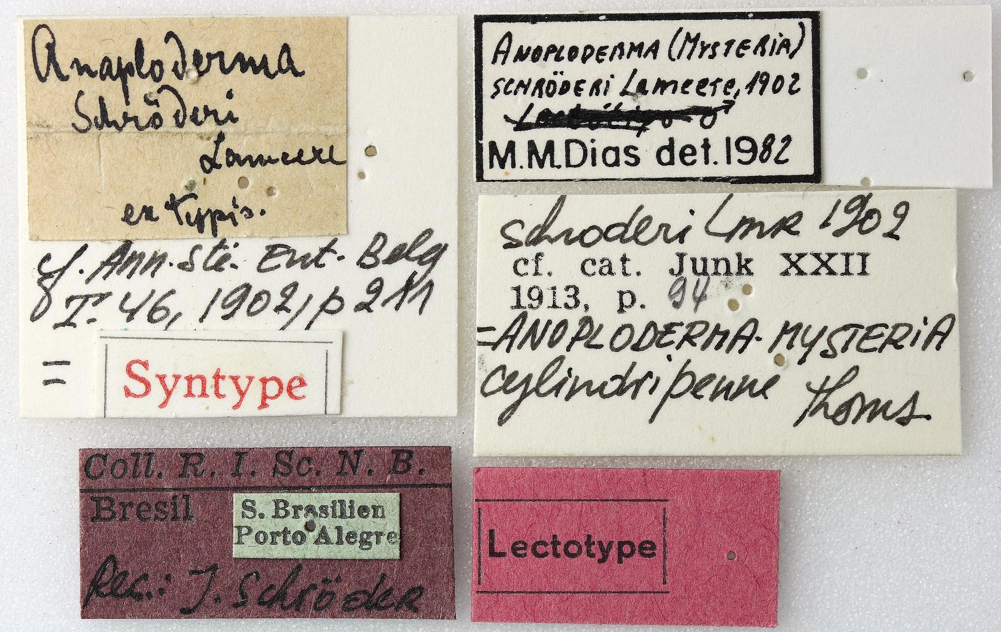 Anoploderma (Mysteria) schroderi 03 00 Lectotype F 023 BRUS 201405.jpg