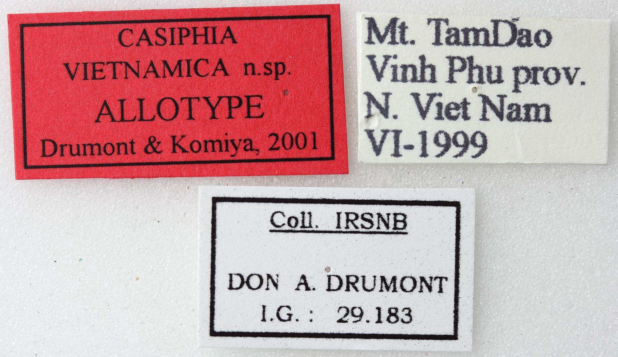 Casiphia vietnamica 02 00 Allotype M 018 BRUS 201405.jpg