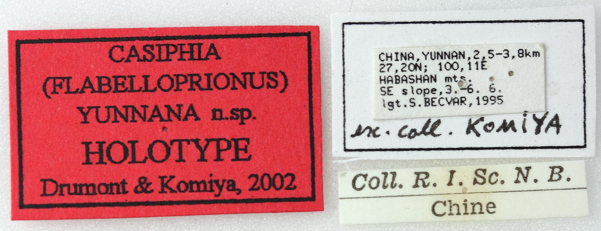 Casiphia yunnana 01 00 Holotype M 025 BRUS 201405.jpg