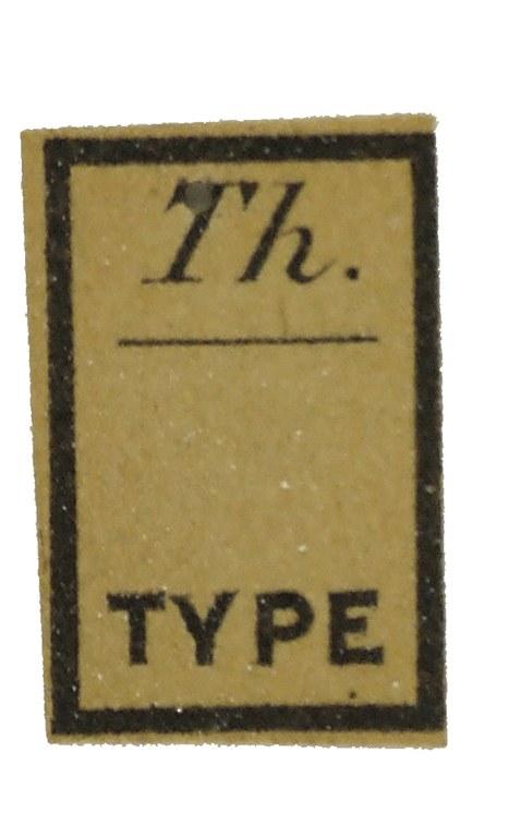 Eurypoda nigrita et T 57587cz90.jpg