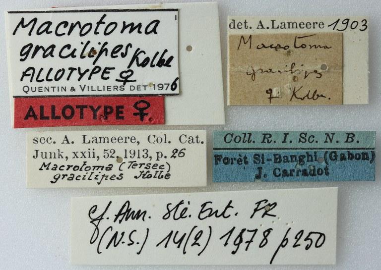 Macrotoma (Metriotoma) gracilipes 02 00 Allotype F 051 BRUS 201405.jpg
